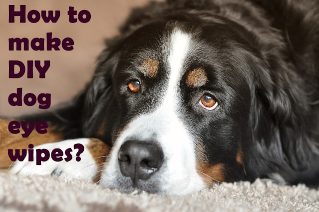 How to make homemade eye wipes for dogs?