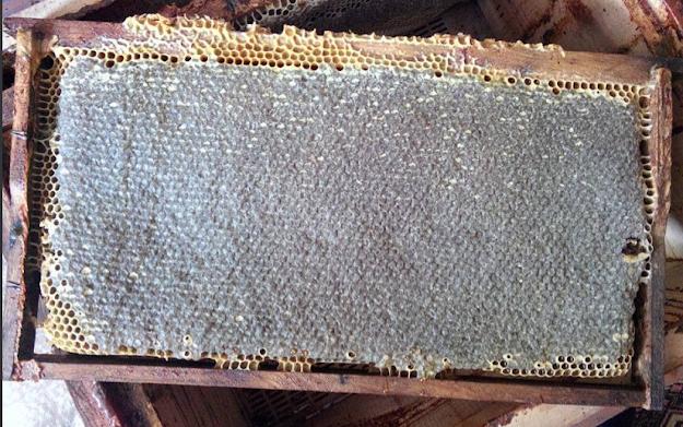 Γιατί το καλοκαίρι οι μέλισσες βάζουν μέλι μόνο σε μαύρες κηρήθρες