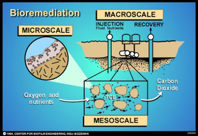 Mengenal Apa itu Teknologi Bioremediasi