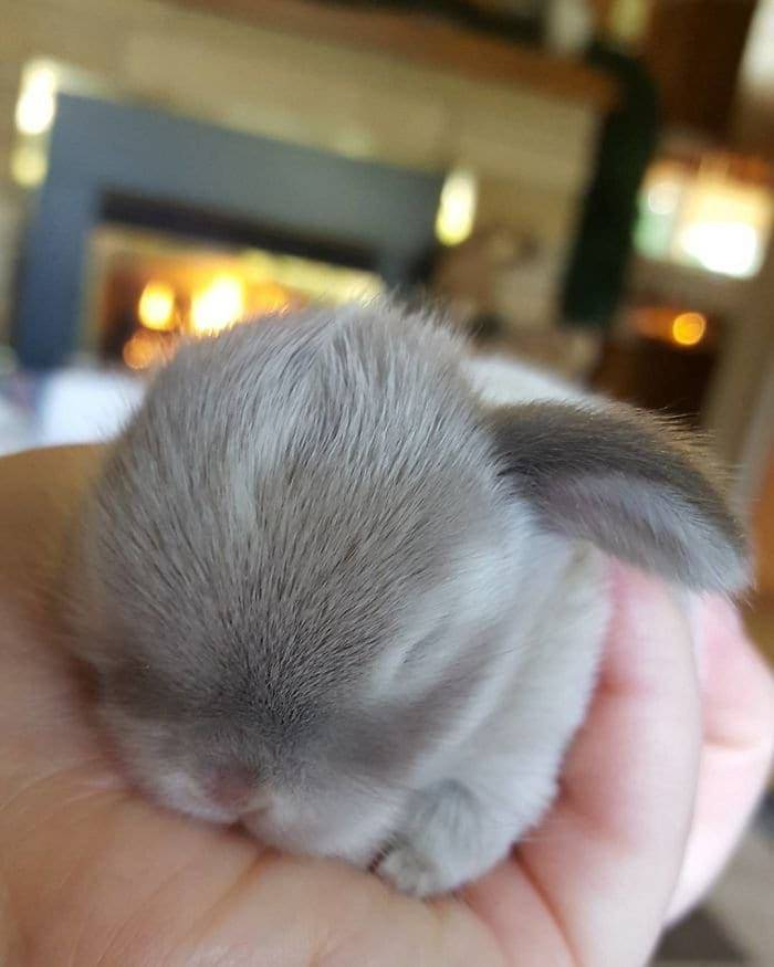 Cute new born rabbits that will melt your heart