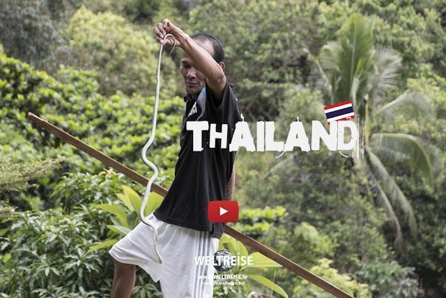Kampf gegen Schlangen auf Koh Phangan www.WELTREISE.tv #195
