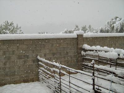 clima, Beceite, nieve, frío, nevada, está nevando, Beseit, neu, olivares, olivars