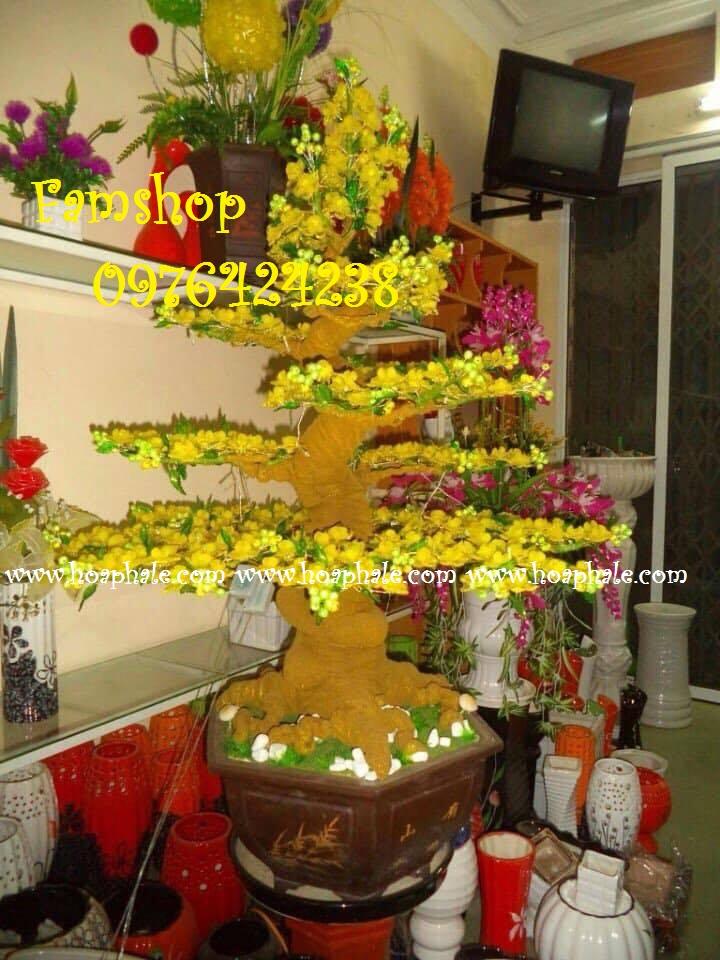 Goc bonsai cay hoa mai tai Bo De