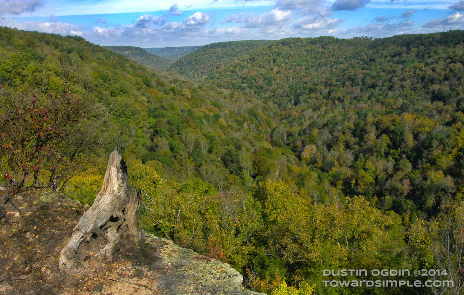 View from Collins Gulf Overlook at Savage Gulf State Natural Area in TN