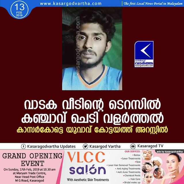 Kottayam, Kerala, Kasaragod, Ganja, Youth, Arrest, Ganja farming; Youth arrested