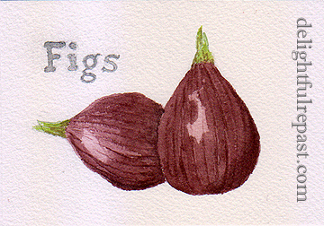 Fig Rolls - Fig Newtons (this photo - my watercolor sketch of two figs) / www.delightfulrepast.com