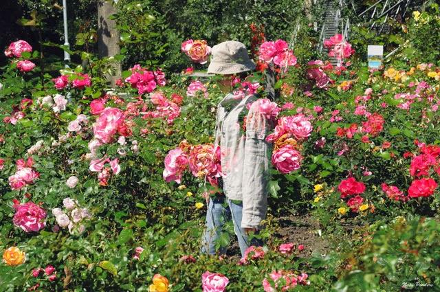 Naty ponders style blog garden tulln for Garten pool tulln