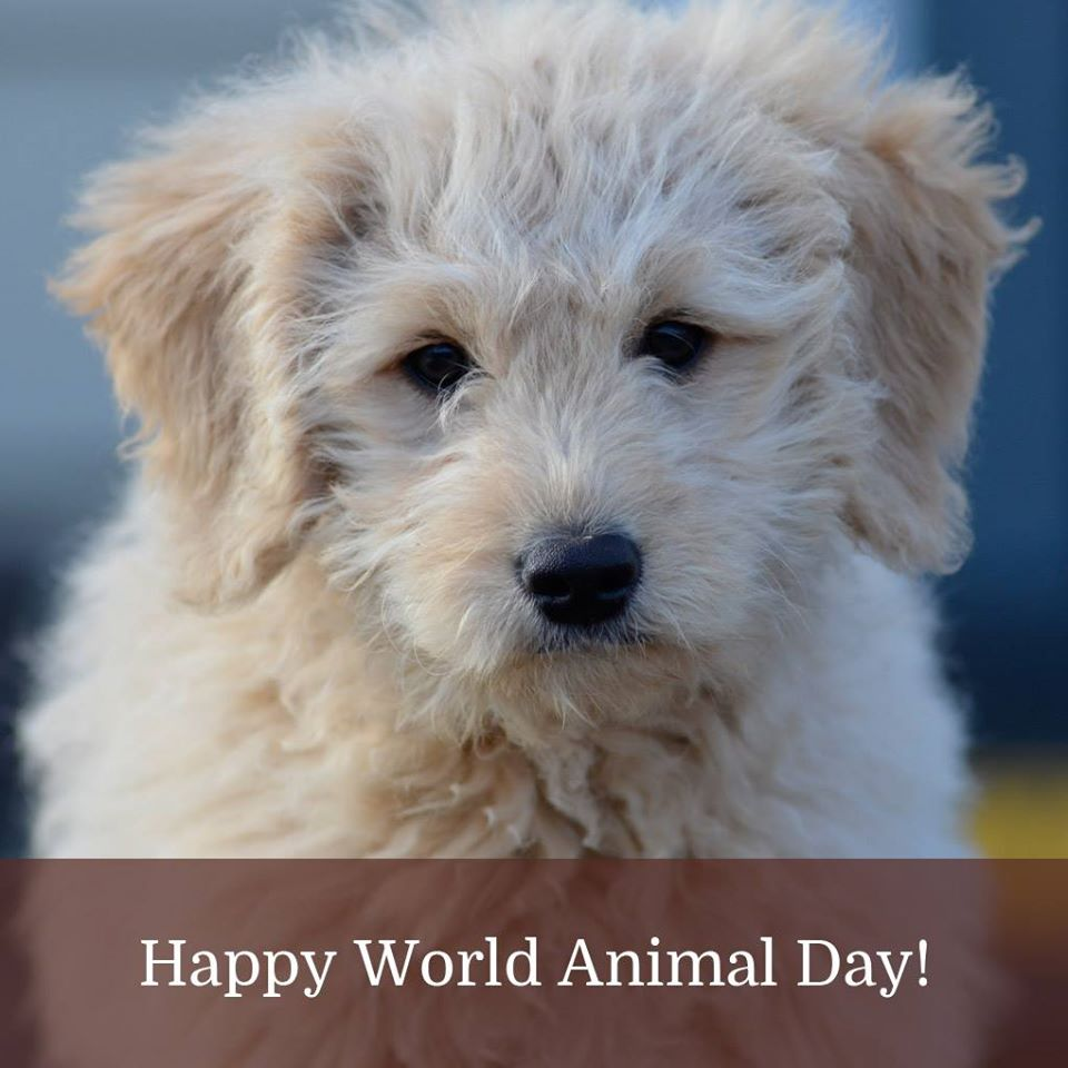 World Animal Day Wishes Unique Image