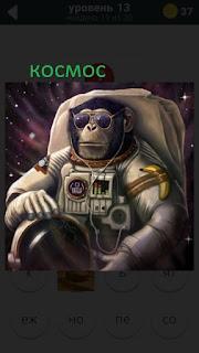 470 слов. все просто обезьяна собралась в космос 13 уровень