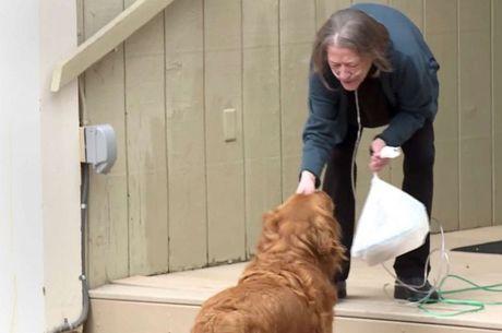 Imune ao vírus, cachorro aprende a fazer entrega nos Estados Unidos