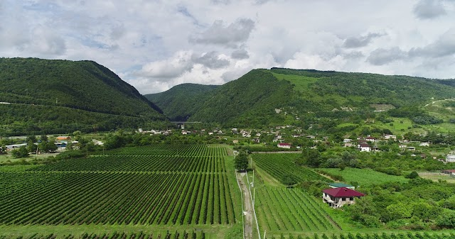 Виноградники в Ачадаре