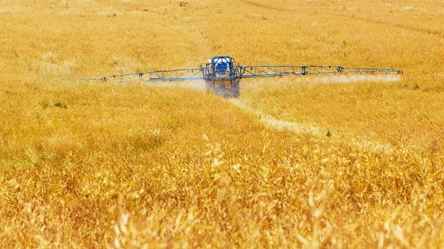 5 Ways Chemical Fertilisers Are Dangerous