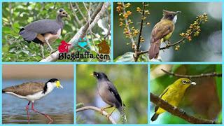 8 jenis burung di Indonesia hampir punah