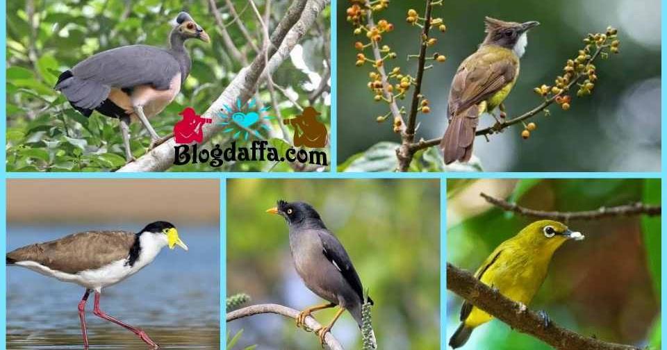8 Jenis Burung Di Indonesia Yang Hampir Punah Blogdaffa Com