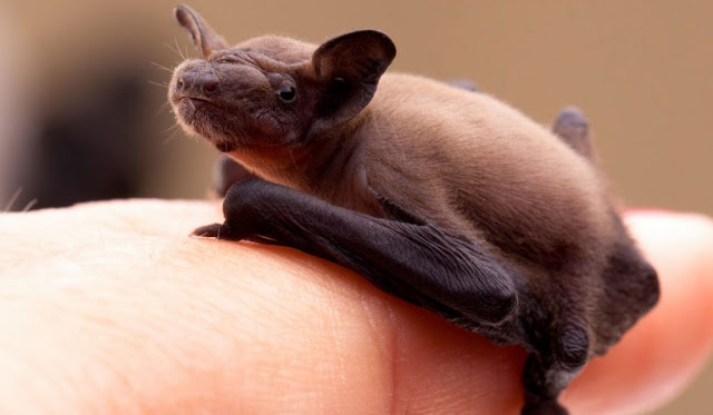 Τουλάχιστον 10 νεκροί από ιό που μεταδίδεται από νυχτερίδες