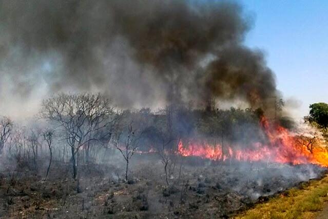 Decreto federal proíbe queima controlada por 120 dias