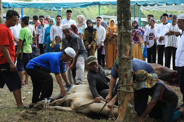 Panitia kurban memotong lembu di lokasi alun-alun Kisaran.