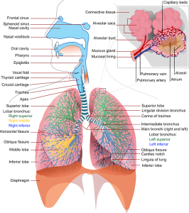 Penyakit Paru-Paru Di Indonesia
