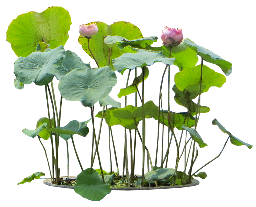 Small Water Plants