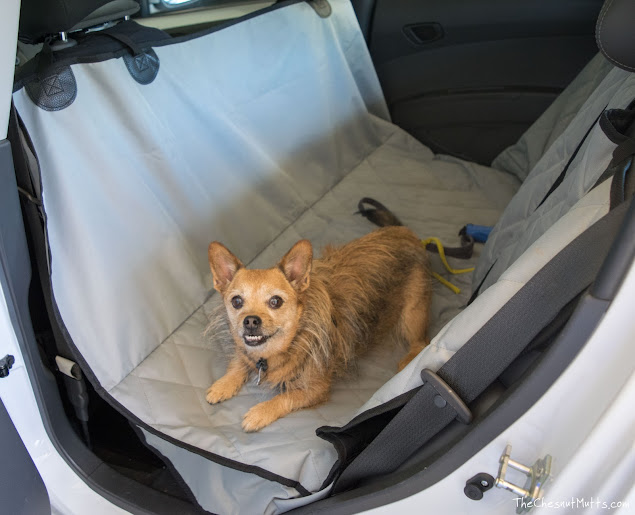 car seat covers for dog owners