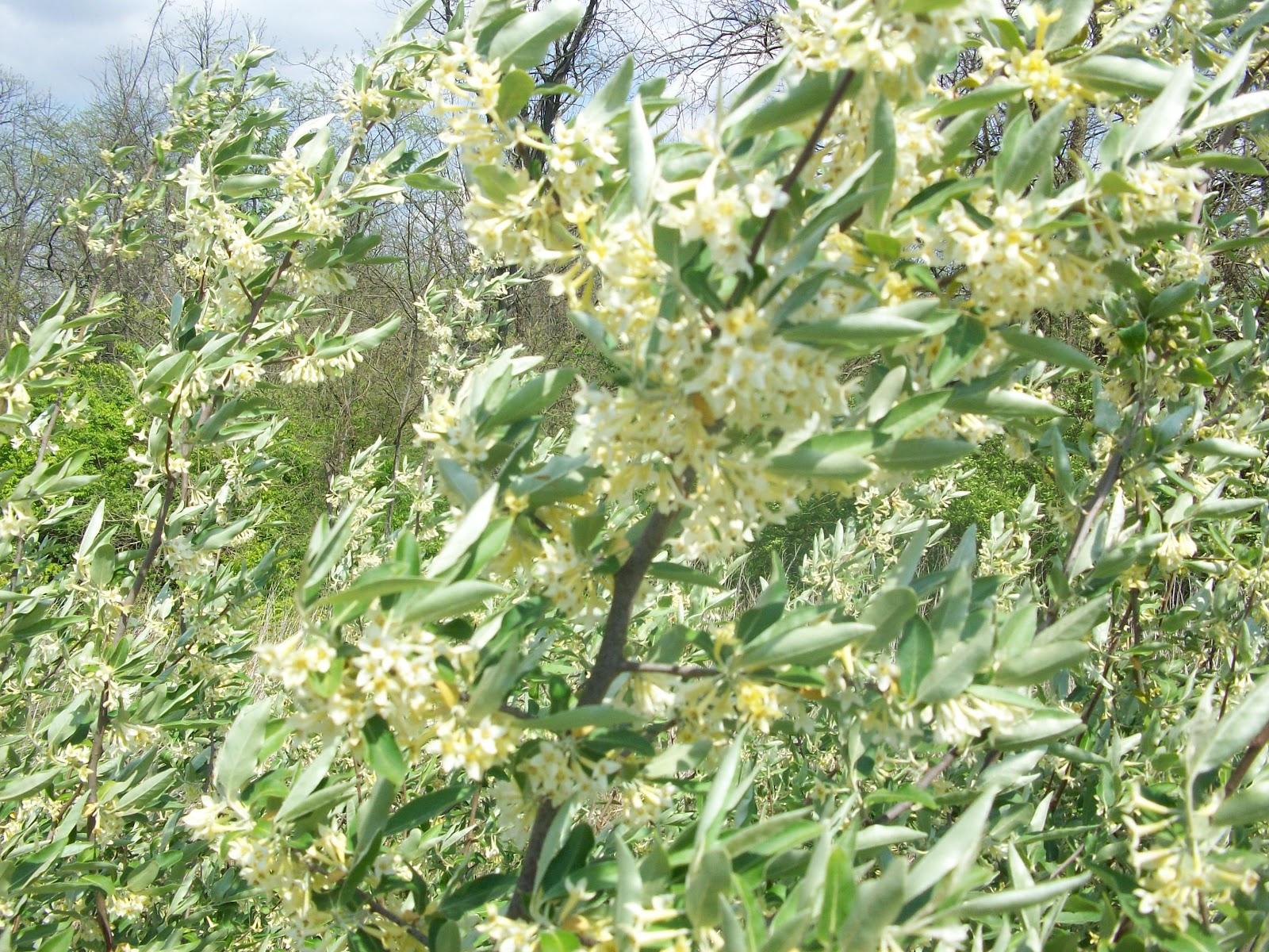 Honeyrun Farm Blooms And Bait Hives