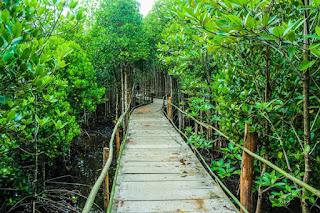 Persebarang Hutan Mangrove