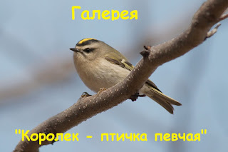 "Галерея ""Королек - птичка певчая"""