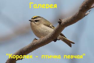 """Галерея """"Королёк-птичка певчая"""""""