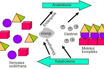 Pengertian Umum Metabolisme dan Proses Metabolisme