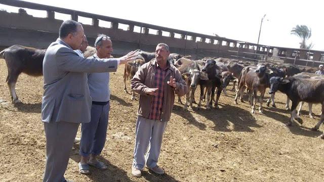 محافظ أسيوط :خطة شاملة لتطوير مزارع الثروة الحيوانية ومتابعات وجولات مستمرة على المزارع