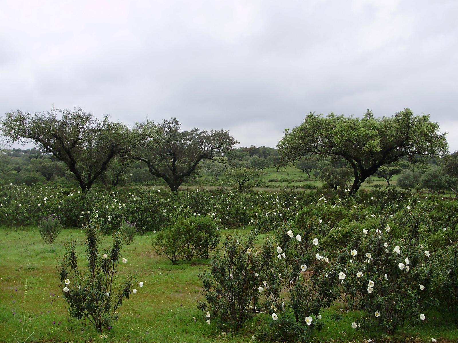 Montado em Portugal