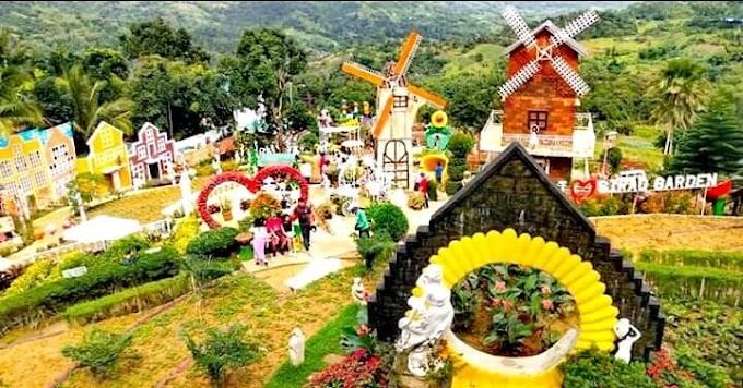 Sirao Flower Farm: The Little Amsterdam of Cebu