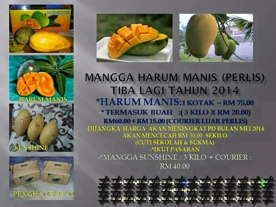 Mangga harum manis perlis online dating