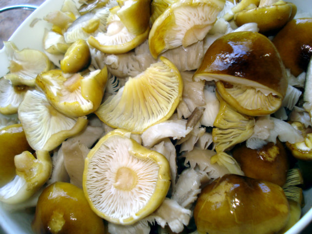 prepare honey mushrooms