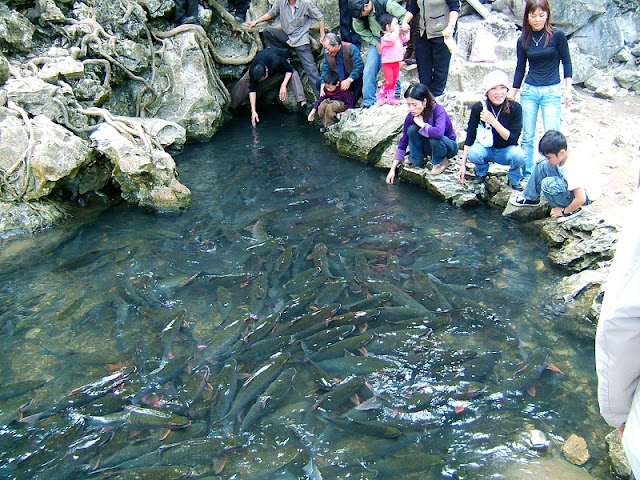 God Fish Stream in Thanh Hoa
