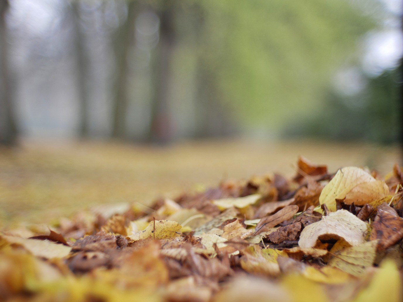 Herbst im Hirschpark