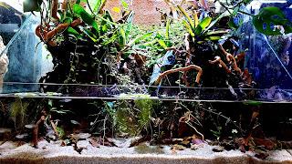 Cool Community Fish Tank 4K HD Wallpaper