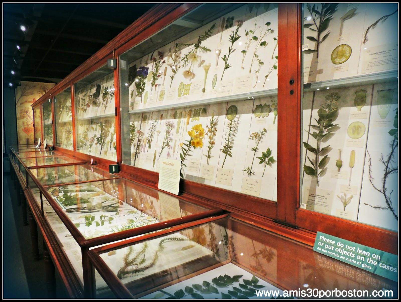 Las Flores De Vidrio del Harvard Museum of Natural History