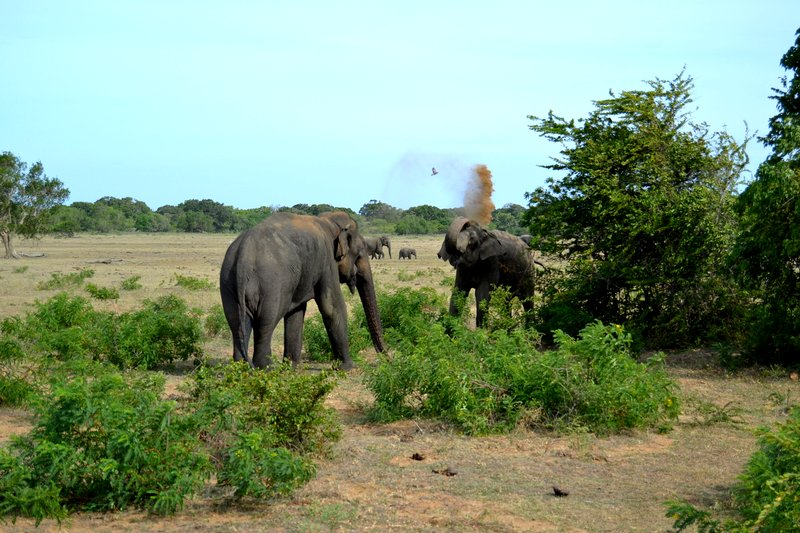 Yala national park safari elephants