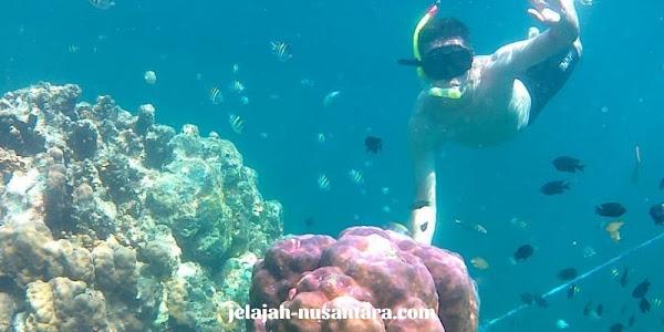 snorkeling pulau semak daun