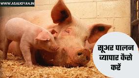 सूअर पालन व्यापार कैसे शुरू करें 2021 | How To Start Pig Farming In Hindi