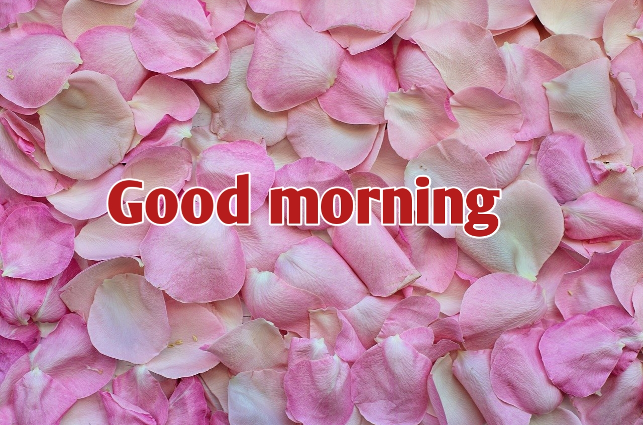 Latest 50 Good Morning Photos Images Pictures Pics Download