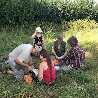 A team of bird ringers studying Barn Owls