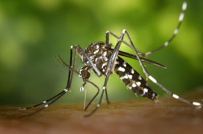 What is Dengue Fever | Aedes Aegypti | Dengue Mosquito | Treatment