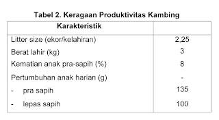 kambing indonesia