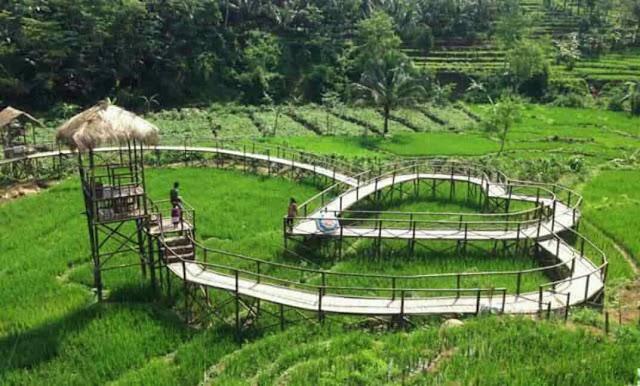 Cafe Tepi Sawah Pujon Kidul