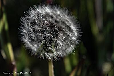 När maskrosorna börjar blomma över är det ett otvetydligt tecken på att sommaren nu är här. Bara att njuta av all fägring ...