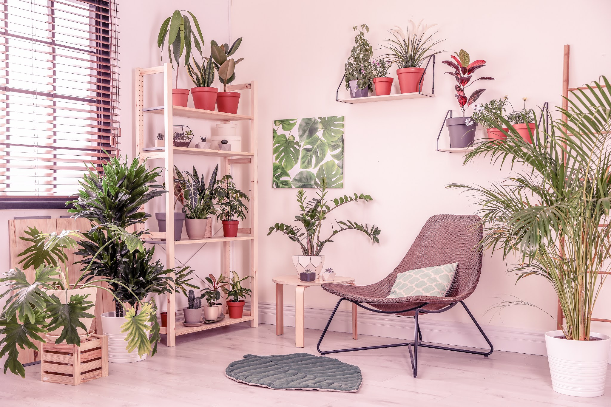 Stylish living room interior with home plants and lounge chair