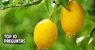 Top 10 de preguntas sobre el cuidado de los limoneros y demás cítricos
