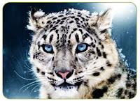 leopardo de las nieves bilaketarekin bat datozen irudiak